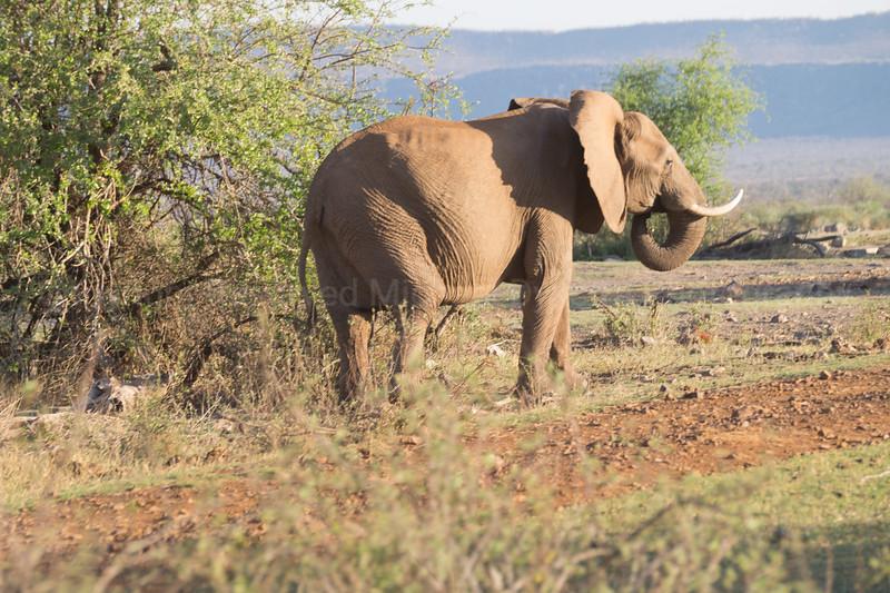Madikwe-43.jpg