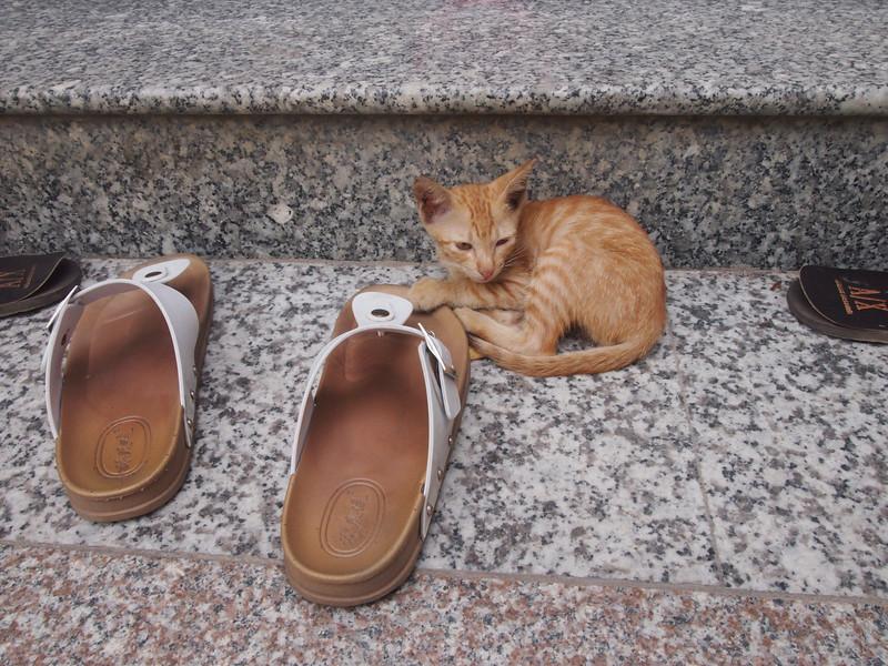 PA274857-temple-kitten.JPG