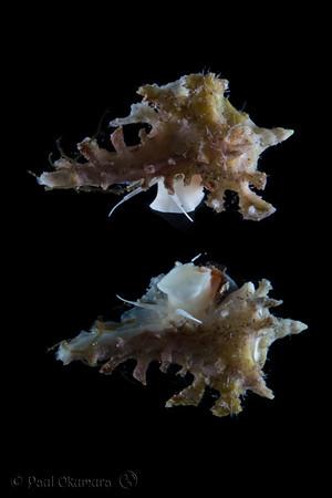 Reef Creatures