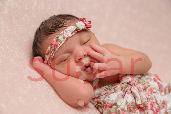 Amadia Rose Newborn Photoshoot