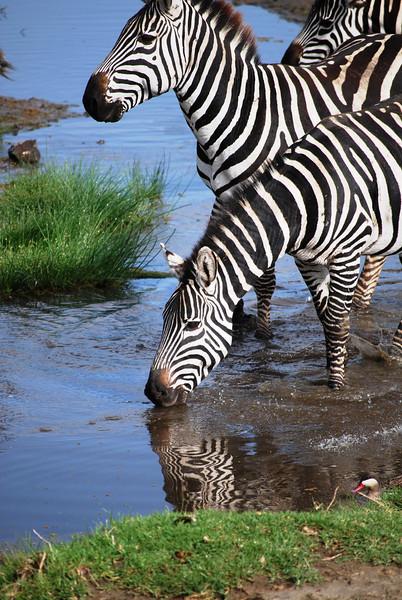 Ngorongoro (11).JPG