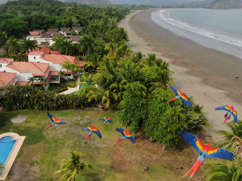 Macaws in Flight at the Beach