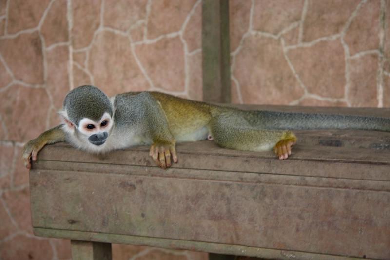 monkey-rescue-centre_4890249957_o.jpg
