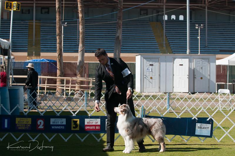 20170205_Australian Shepherds_Lost Dutchman Kennel Club-198.jpg