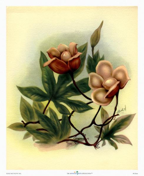125: Ted Mundorff -- 'Wood Rose' Floral Art Print, ca 1940-1950.