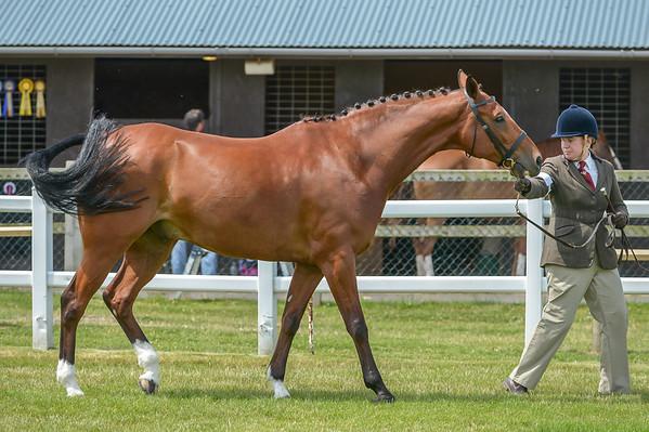 Class 16G Sporthorse (Horse / Pony)