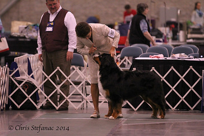 Sweeps 15-18 mos Puppy Dogs BMDCA 2014