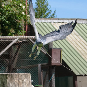Thirsk Birds Of Prey Centre, (Falconry UK) Sion Hall. North Yorkshire.