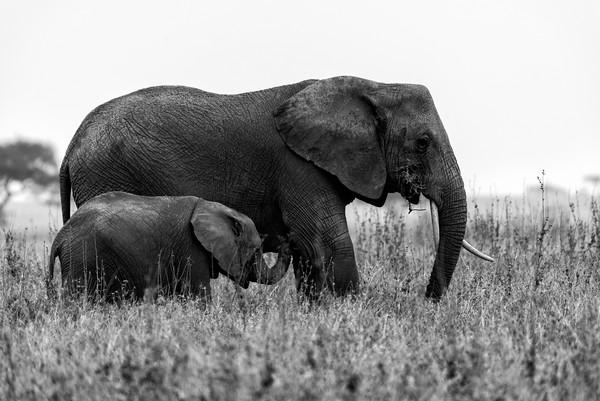 Afrique /Tanzanie et vie sauvage