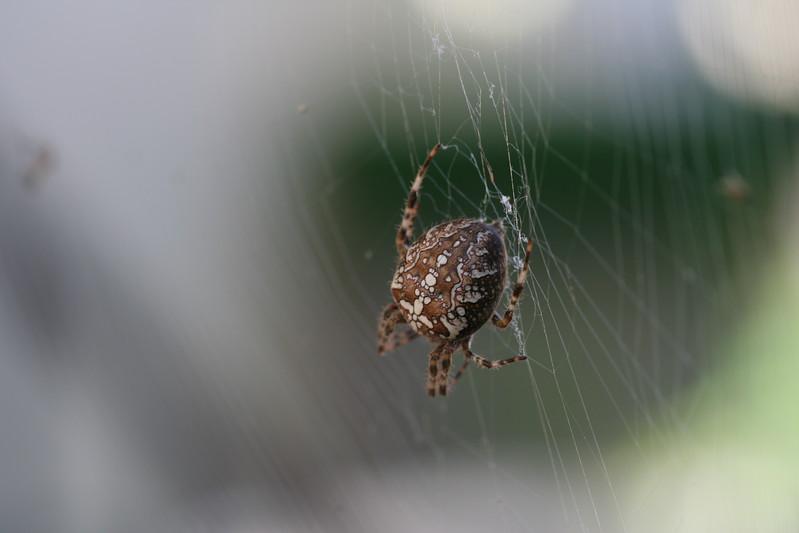 9128 Spider.JPG