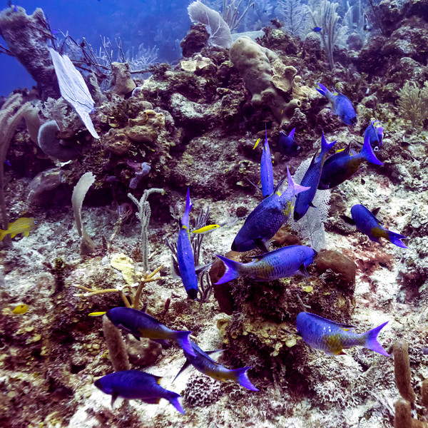 Fish and coral underwater, Belize Barrier Reef, Belize
