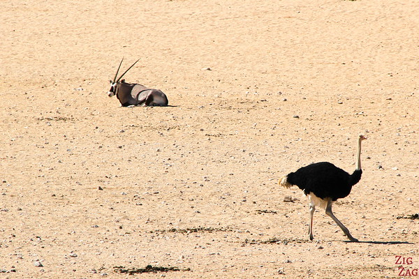 Road trip through South Namibia: spotting oryx and ostrich