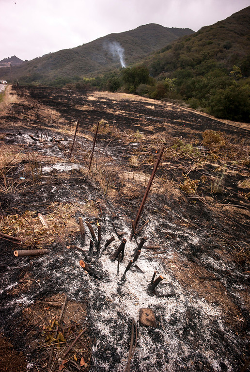 . Charred land along Protrero road near Hidden Valley Sunday.  Cool damp weather has helped crews begin to get the upper hand on the fire which has burned more than 10,000 acres.  Photo by David Crane/Los Angeles Daily News.