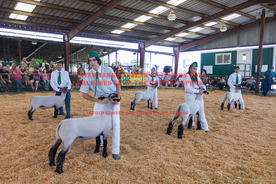 2017 Chino Fair - Market Sheep