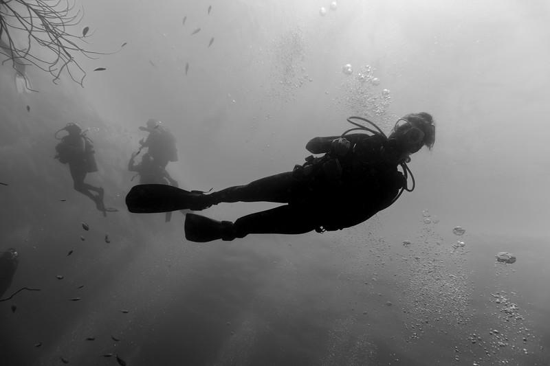divers bw bon18.jpg