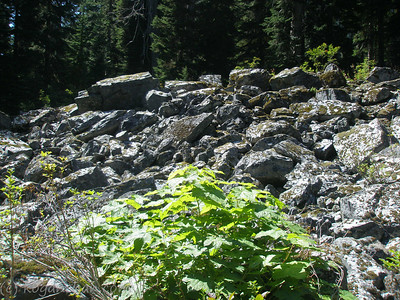 gold creek trail august 2007