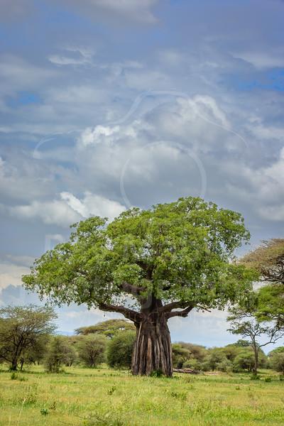 Tanzania - Tarangire