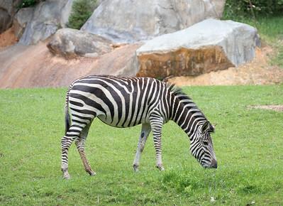 NC Zoo 5-7-19