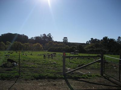 Handley's Goat Farm 12/08