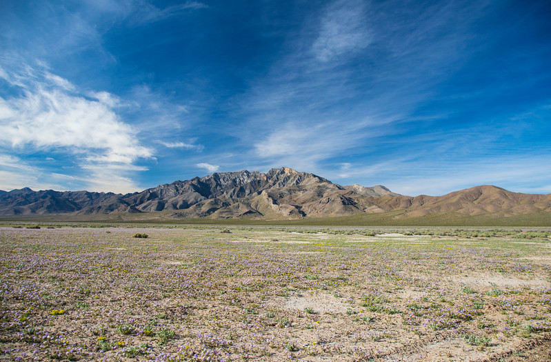 Pahrump-west-toward-DeathValley-Spring-Flowers-April2017.jpg