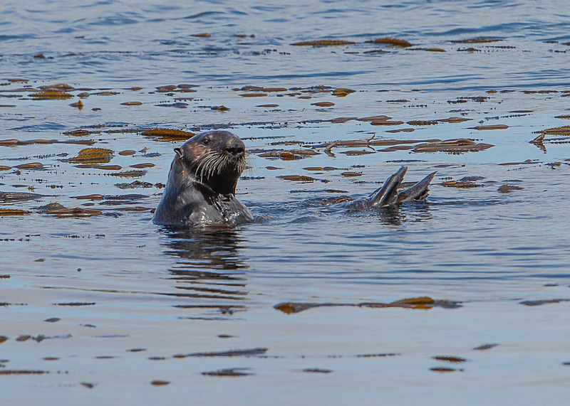 Morrow Bay Otters and AG Roosters-25.jpg