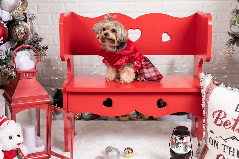 12.10.19 - Leide e Mel's (Mel Pet) Studio Christmas 2019 - -6.jpg