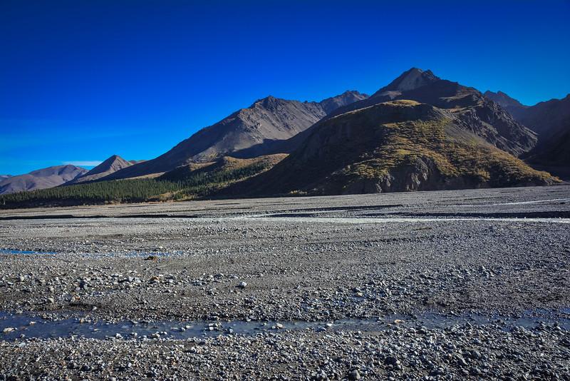 Denali-National-Park-84.jpg