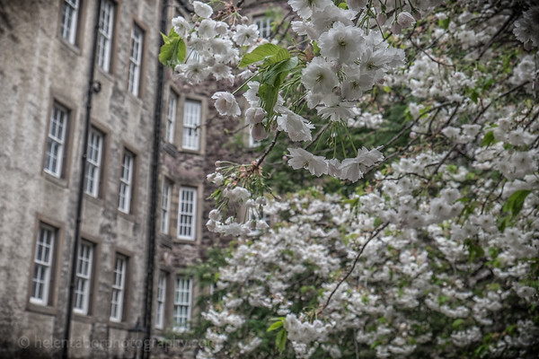 Edinburgh-27.jpg