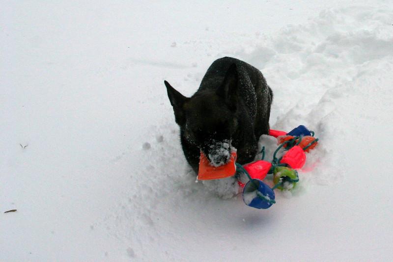 2009.12.9 Blizzard Brita yard (17).JPG