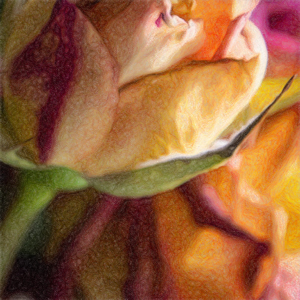 June 6 - Greens and reds and oranges and magentas and yellows.jpg