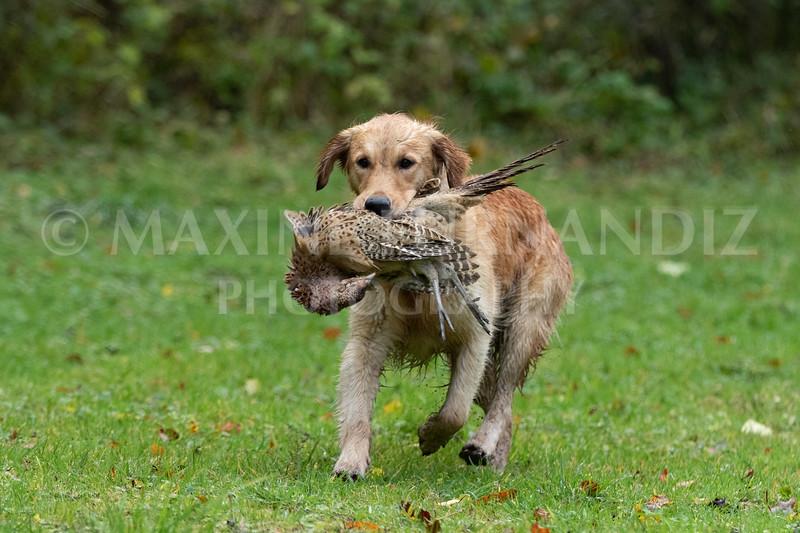 Dogs-4699.jpg