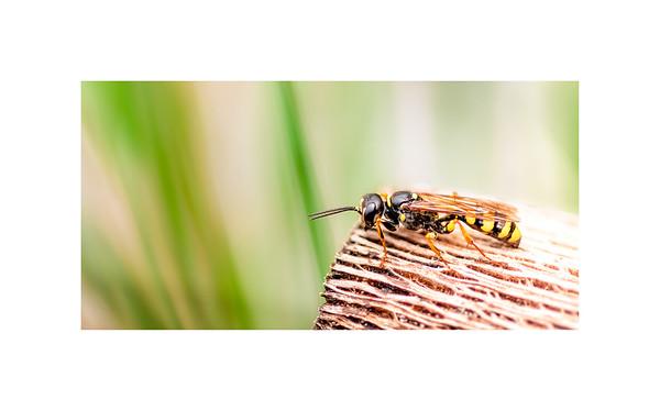 Wildlife:  Wasps