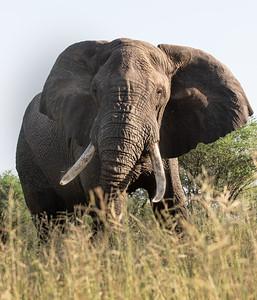 Safari Slideshows