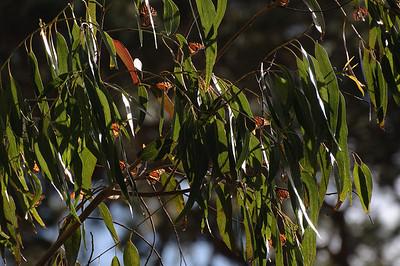 Northern California January 2010