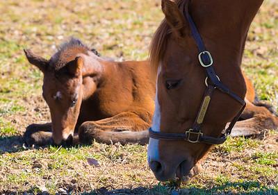 2017-02-19 Shamrock Farm - Babies