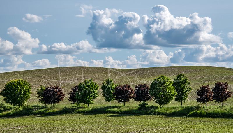Tree Lane 2019.jpg