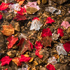 Refracted fall leaves