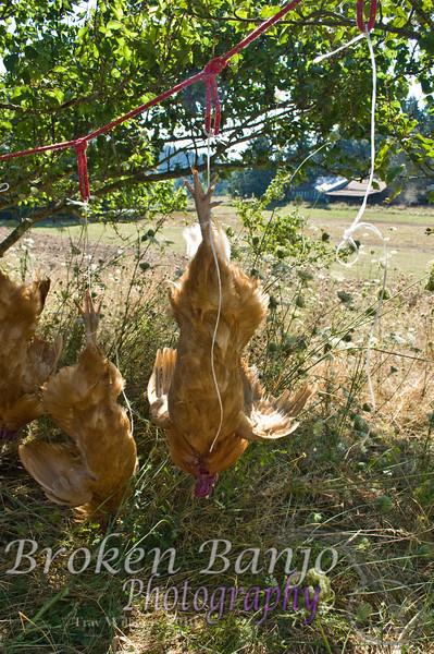 Chickenslaughterhigh_8.JPG