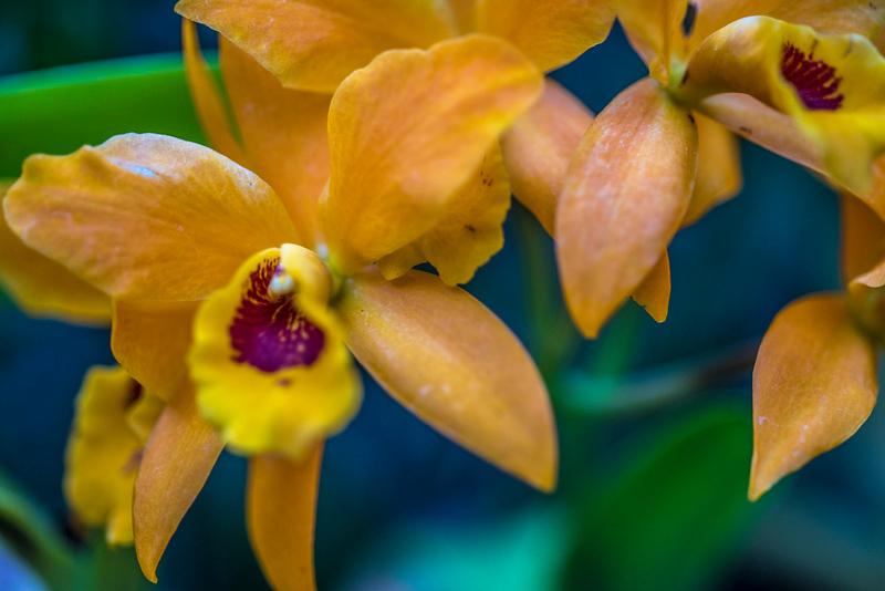 orchidroom-16.jpg