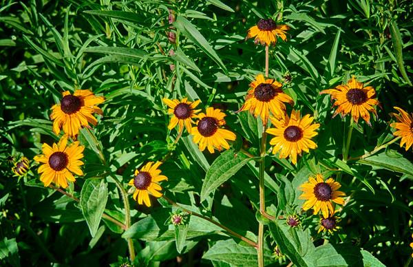 Southlake - Bicentennial Park Liberty Garden