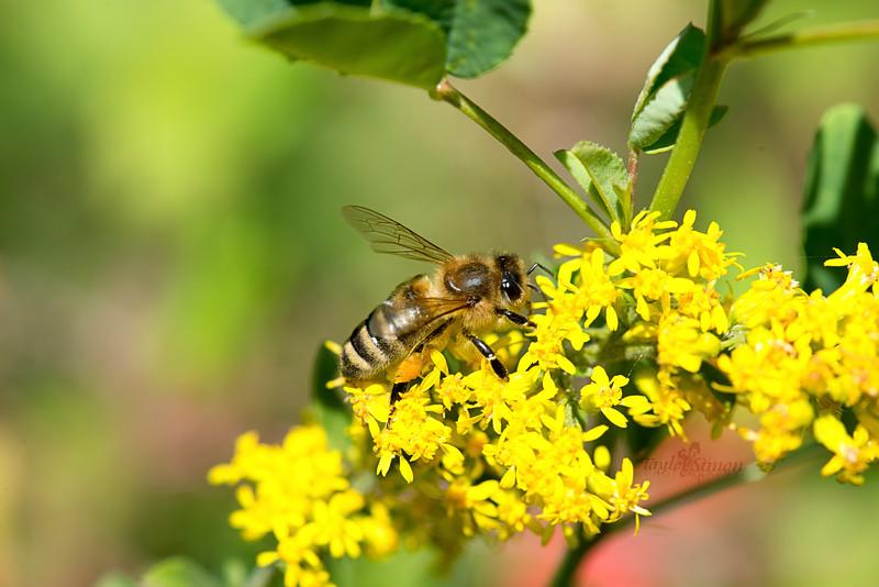 Bumblebee 01.jpg