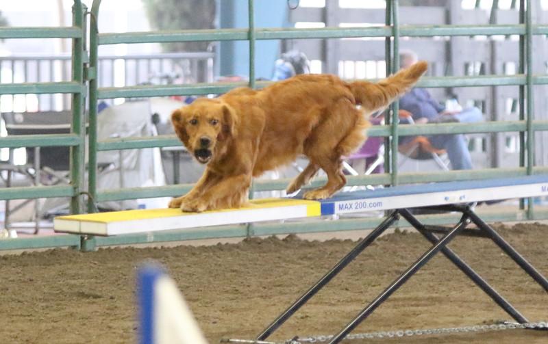 3-15-2015 Bloodhound-9822.jpg
