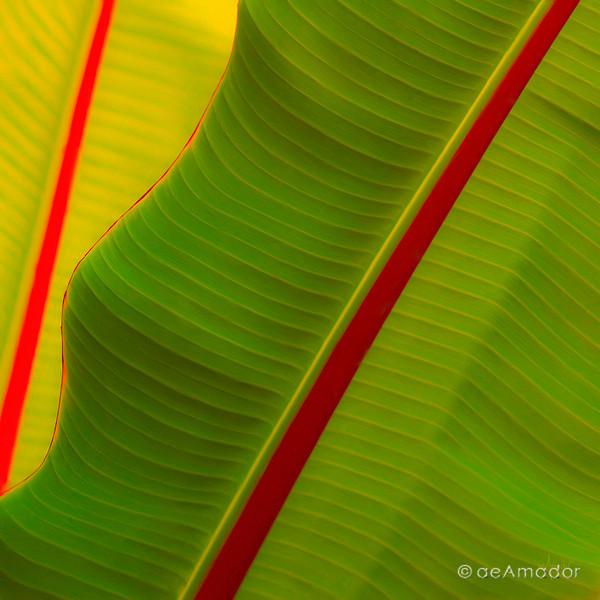 Verde con Rojo 0235-aeamador.jpg