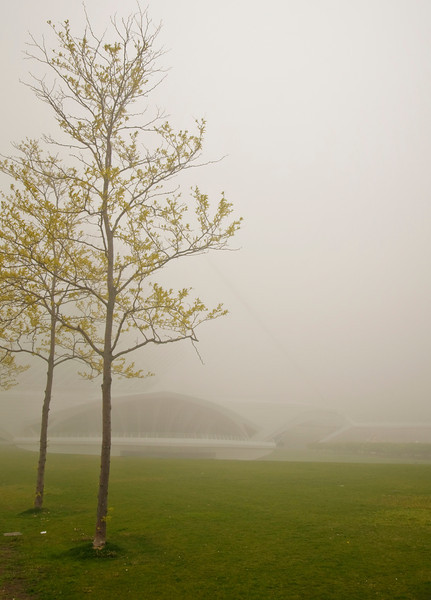 Trees in the fog .jpg