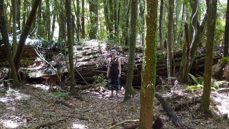 DEC-2010-Justin-Rest-Of-New-Zealand