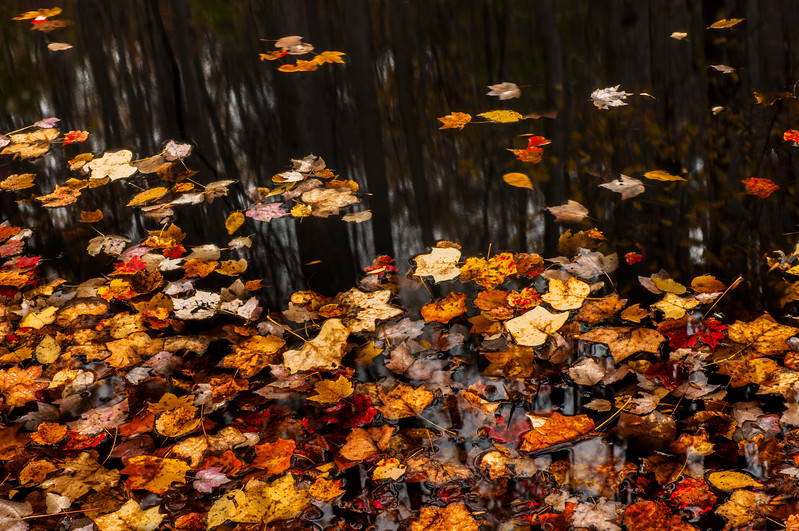 Fall Reflections.jpg