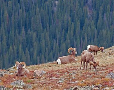 Colorado Nature and Mountains