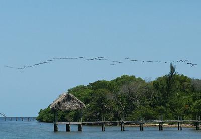 Birds of Belize April
