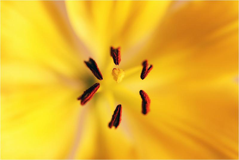 20101021_20101107_Flower_07.jpg