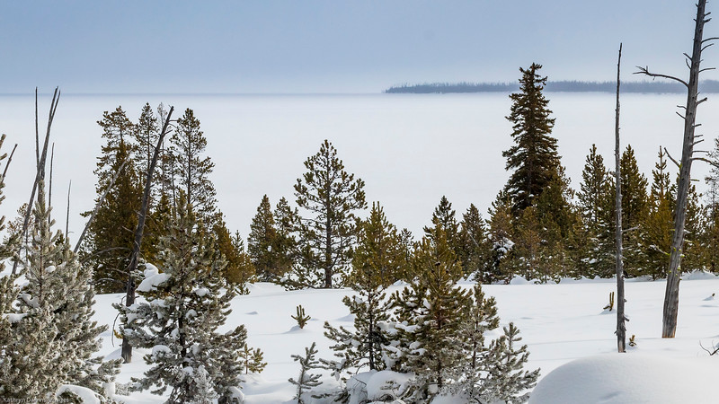 Yellowstone in winter-9806sm.jpg